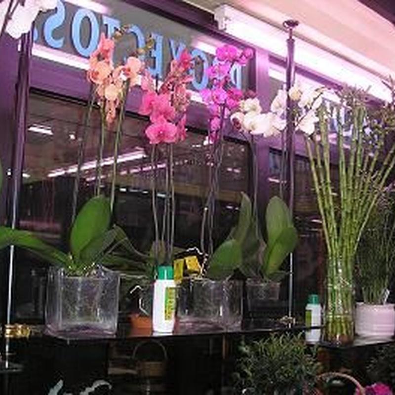 Flores y plantas: Servicios de Floristería Muscari