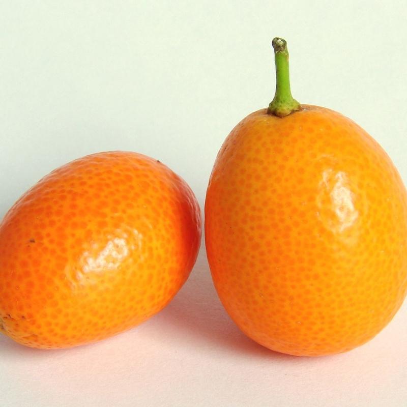 Kumquat: Productos de Mundifruit