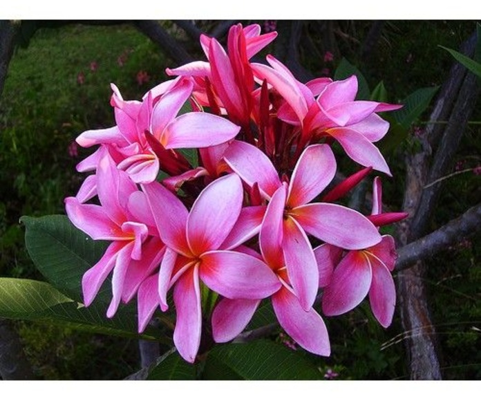 Servicios : Productos y Servicios de Rose Flor