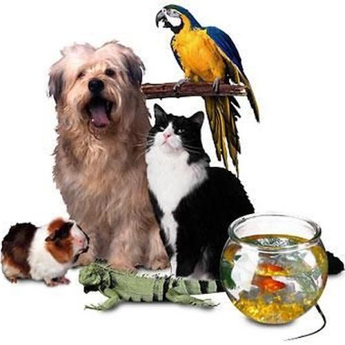 Servicios veterinarios para mascotas en Talavera de la Reina