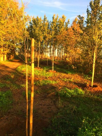 Restauración y limpieza de parajes naturales: Servicios de Jardiart