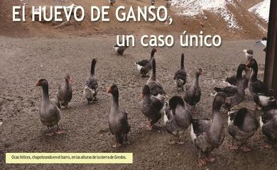 REPORTAJE SOBRE EL HUEVO DE GANSO
