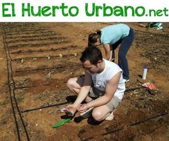¿Qué es un huerto urbano?: Huertos de Huertos Azor