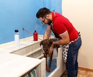 Servicio de autolavado completo para tu mascota