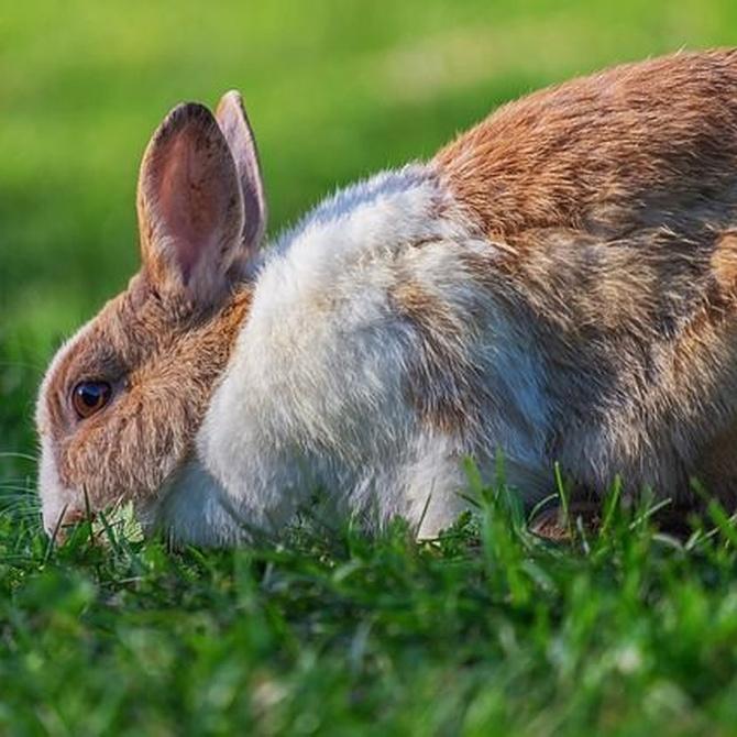 ¿Cuáles son los cuidados adecuados para tu conejo ante una ola de calor?