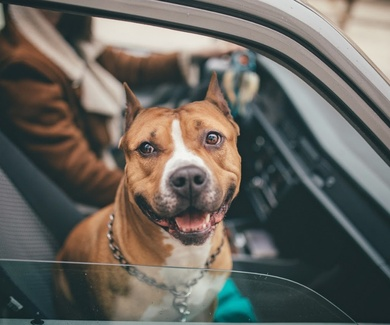 Abogado Vitoria mascotas y divorcio
