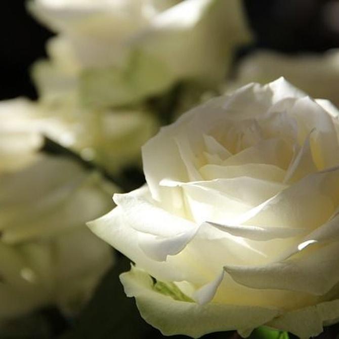 Cómo demostrar amor o amistad con flores