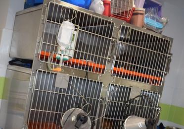Hospitalización veterinaria