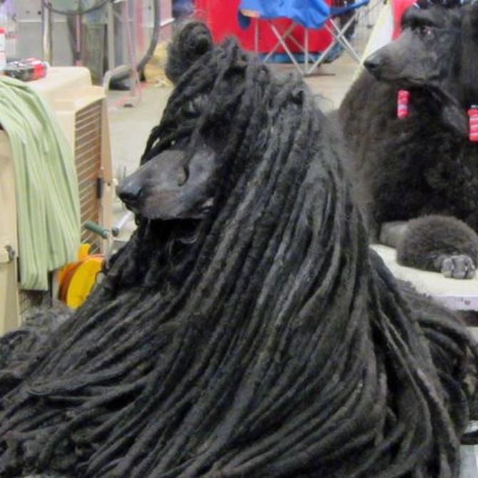 El pelo enredado causa problemas en la piel