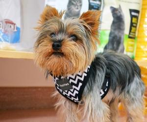 Ropa y complementos para perros en Terrassa