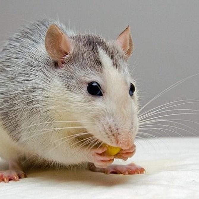 Limpieza para evitar ratones en las comunidades de vecinos