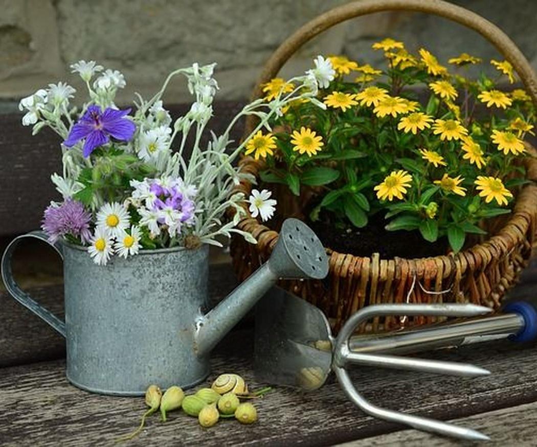 El cuidado del jardín en verano