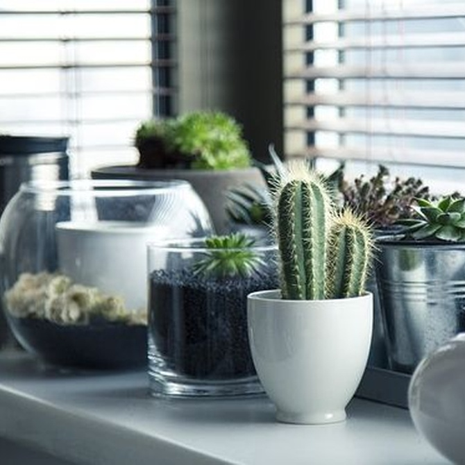Cómo crear un jardín interior