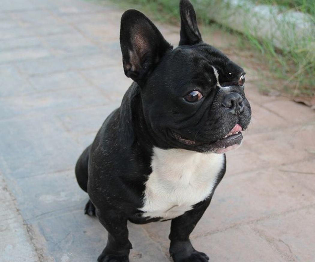 Las obligaciones del propietario de un perro