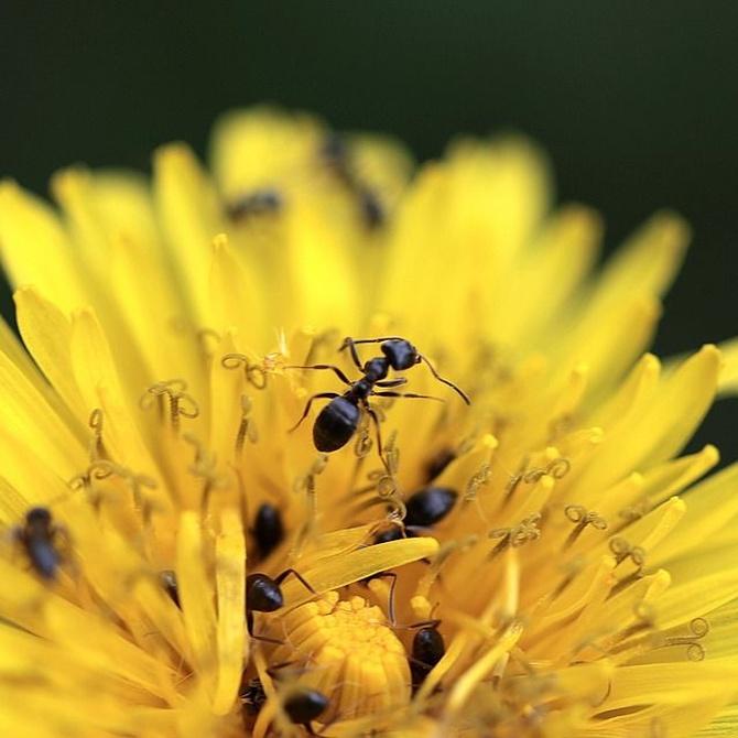 Las plagas más comunes de nuestro jardín