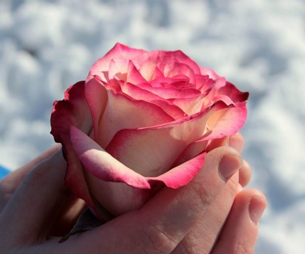 Técnicas para el secado de flores
