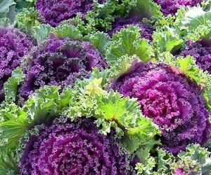 Flores y plantas en Monforte de Lemos