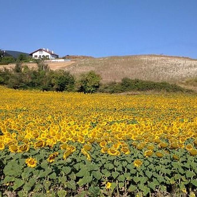 Viajar a Navarra en verano
