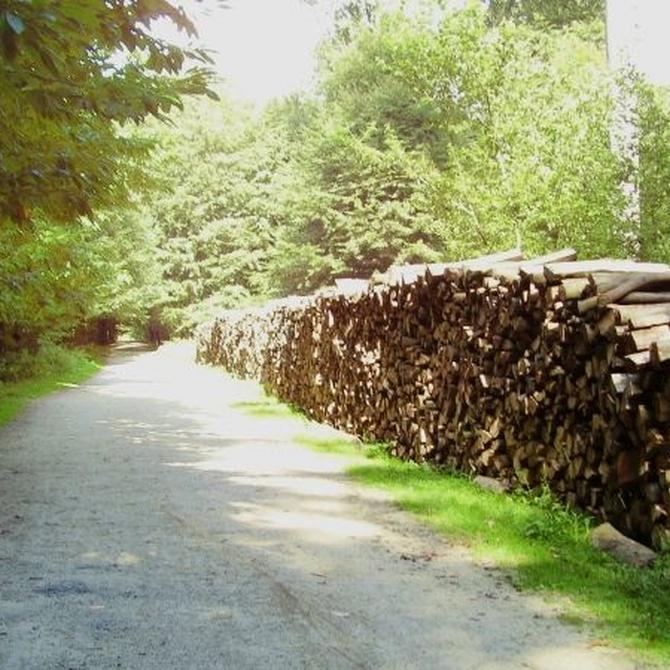 ¿De qué se encarga la silvicultura?