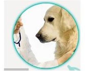 Nutrición : Servicios de Clínica Veterinaria Roncal