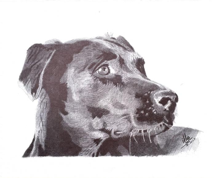 Hacemos retratos de  tu mascota para que nunca la olvides: Productos de Funema Alzira