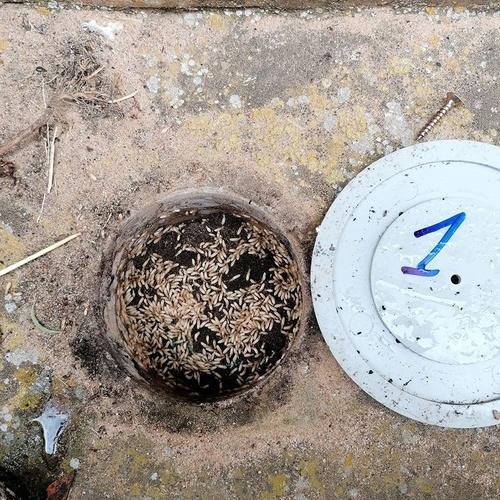 Carcomas y termitas Zamora