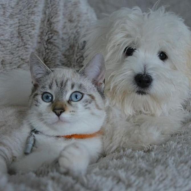 Cómo es la convivencia de perros y gatos en casa