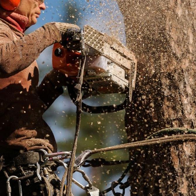 La importancia de la tala de árboles