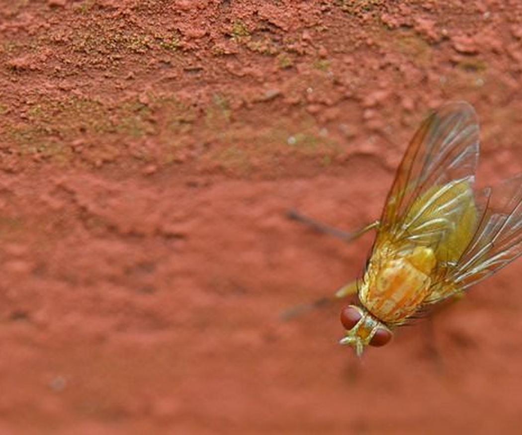 Elimina los restos de insectos que se quedan en la chapa tras un viaje