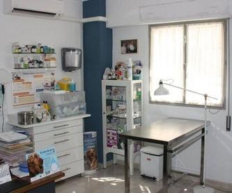 Cirugía y hospitalización: Servicios de Clínica Veterinaria Jeremías