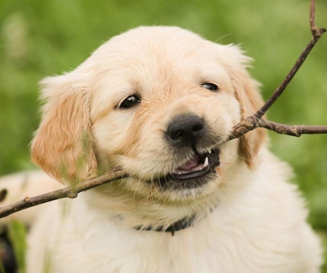 Las mejores razas de perros para niños