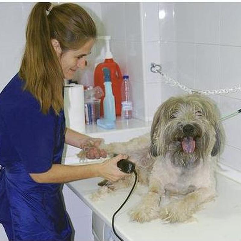 Servicios de peluquería en Clínica Veterinaria Huellas