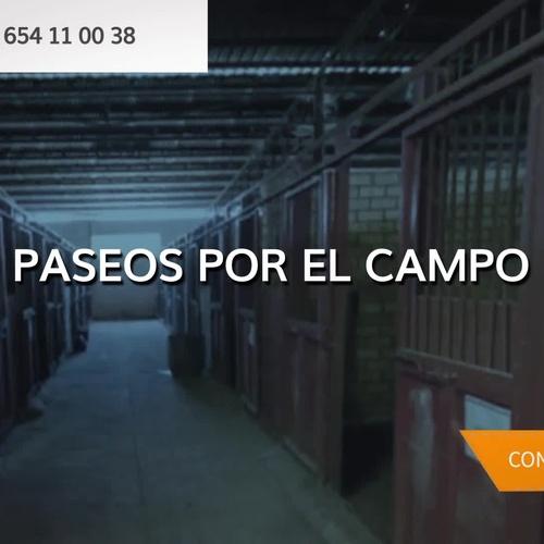 Clases de equitación en Sevilla: Centro Hípico Doble M