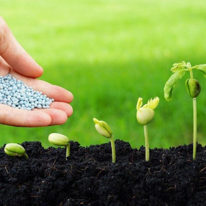 Primavera, hora de sacar tus nuevas plantas al exterior