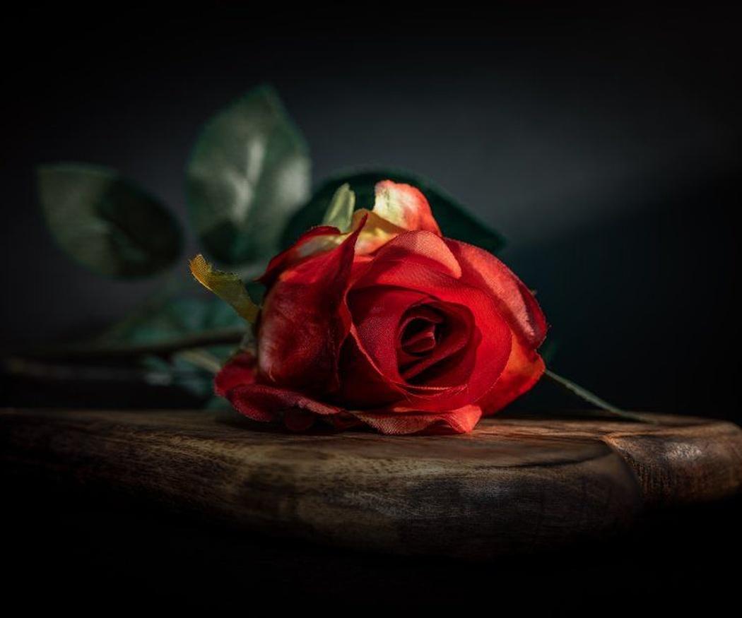 ¿Has oído hablar de las rosas eternas?