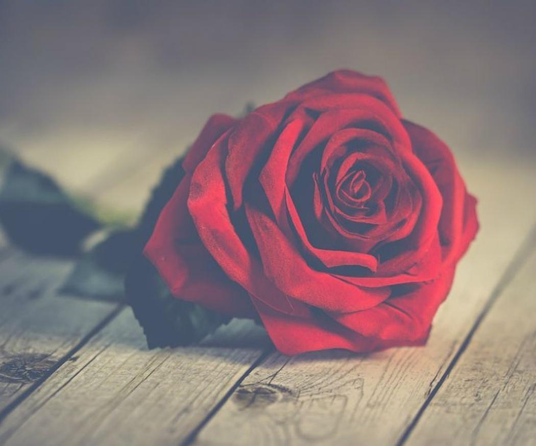Rosas en San Valentín