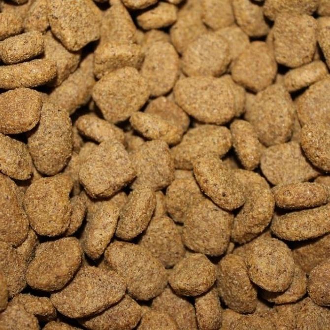 Ventajas del pienso para perros