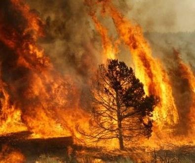 Como actuar en caso de incendios forestales