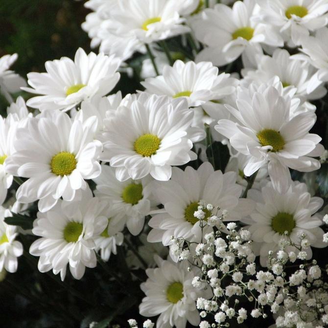 Flores: su significado
