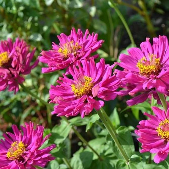 ¿Cómo pueden afectar las altas temperaturas a tu jardín?