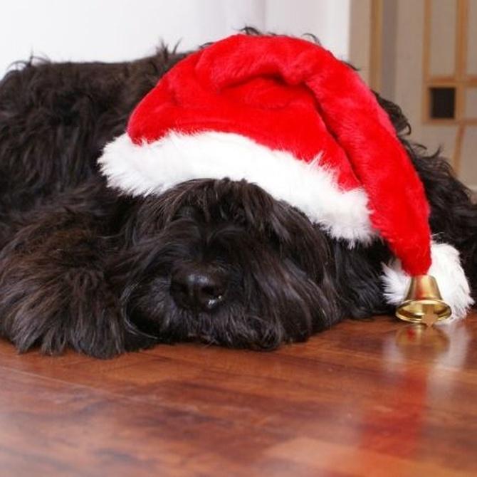 El peligro de los adornos navideños para nuestras mascotas
