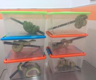Serpientes que trajeron a desparasitar