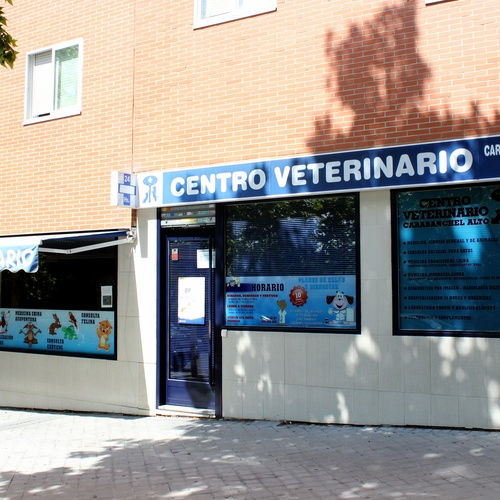 Veterinario abierto el domingo en Madrid