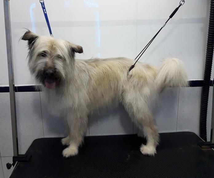 Peluquería canina y tienda especializada de mascotas: Servicios de Centro Canino Unidos