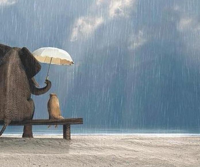 Compasión: Lo mejor que puedes hacer por ti es ayudar a los demás a levantarse