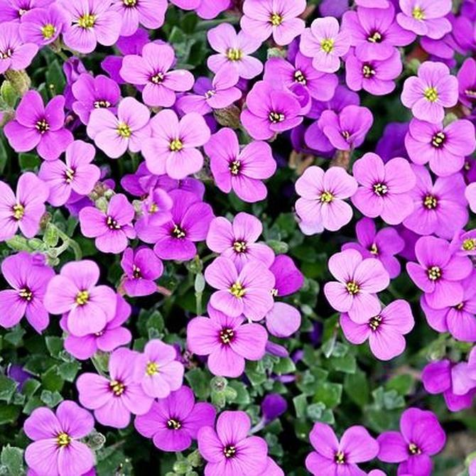 Cómo alegrar tu hogar con plantas