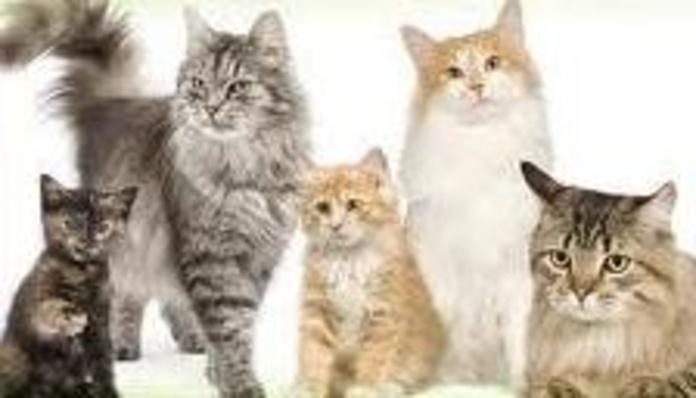 Peluqueria Felina: Nuestros trabajos de Animals Ca la Ruth