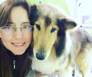 Galería de Academias de peluquería canina y felina en Carballo   Perruqueria Canina Milú