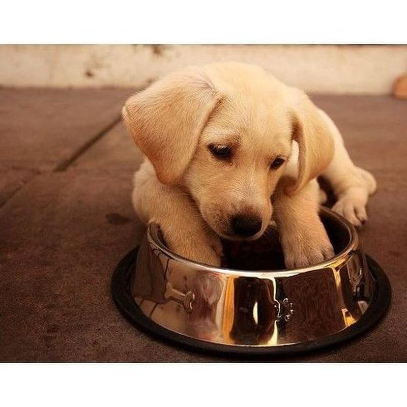 Piensos para perros: Productos de Casa Clemente