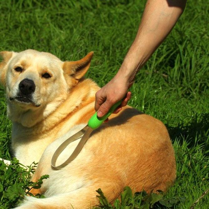 La desparasitación interna y externa de las mascotas